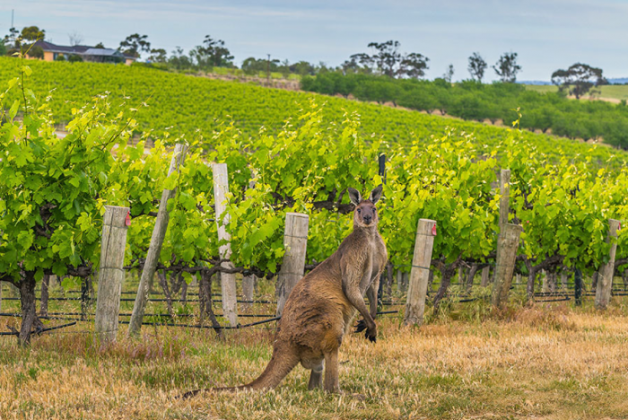 9 Best Places to Go Wine Tasting in Australia - Australia's Wine ...