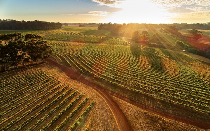 Eight of Australia's best wineries to visit